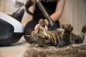 cleaning home with vacuum cleaner because of pet